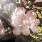 Soft Spring Dreams by Ms-Bexy