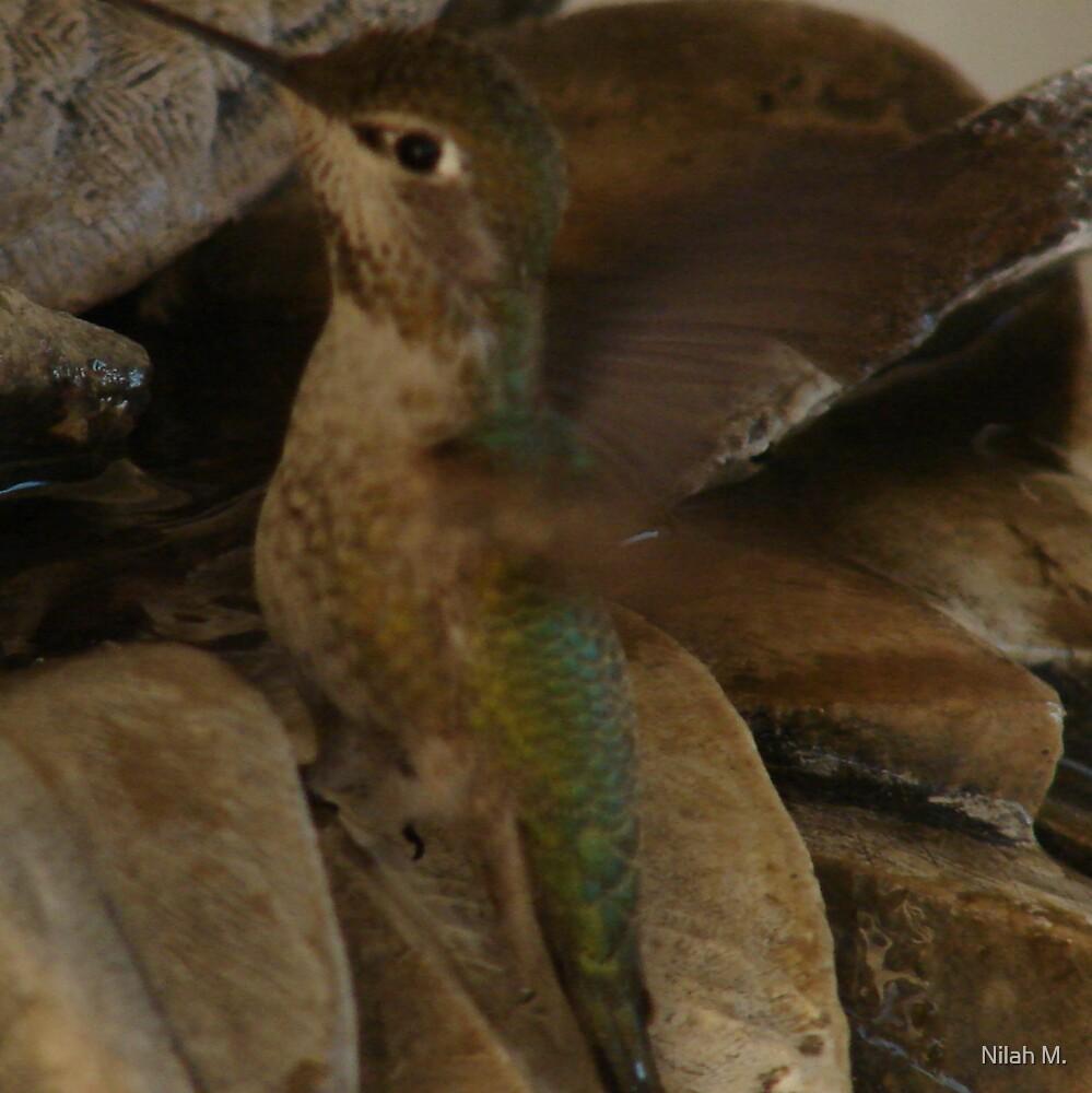 Nilah's Hummingbird by Nilah M.