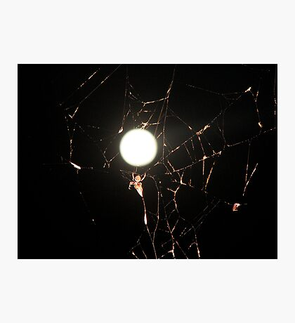 Moon Light Spider Photographic Print