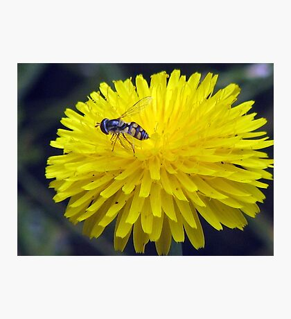 Bush Bee Blend Photographic Print