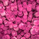 Dozens of Miniature Pink Roses by sjphotocomau