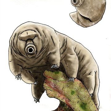 Tardigrado - Bear of Water by absurdboy