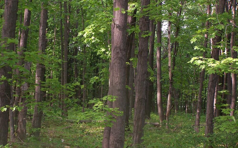 Walking in woods by Norris01