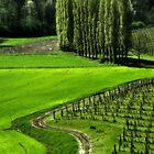Spring landscape by Livio  Ferrari