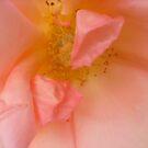 Hidden in the heart of roses by Ana Belaj