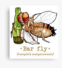 Bar fly Canvas Print