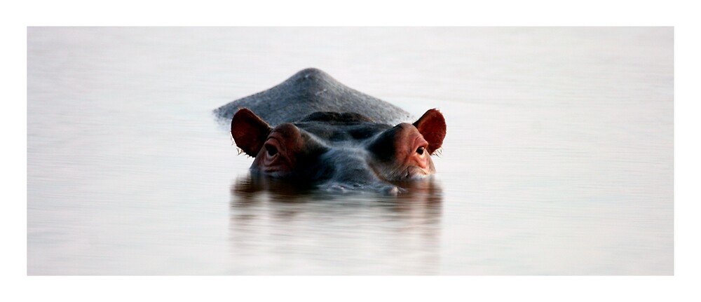 Hippo reflection by Rob Watermeyer