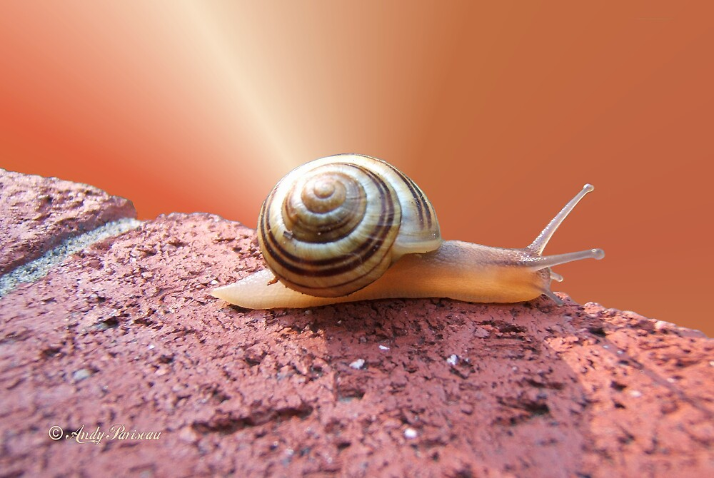 Snail 200 by Andy2302