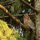 Splendid in Spruce (with prey) by Heather King