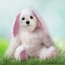 Snowdrop the Maltese - Dressing Up for Easter ! by Morag Bates