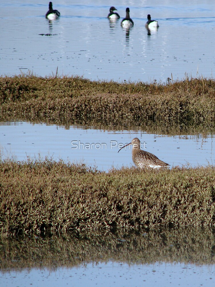 For Jesika - A Curlew by Sharon Perrett
