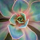 Succulent 2 by alan shapiro