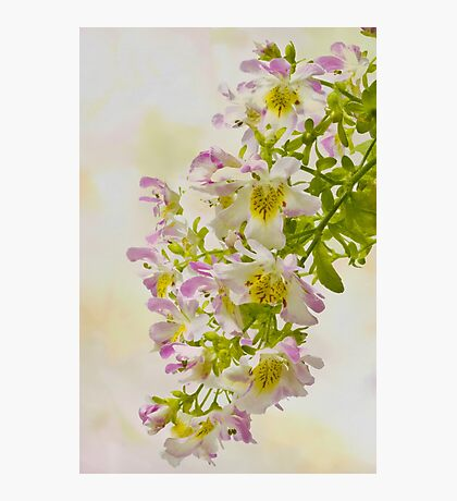 Butterfly Flowers  Photographic Print