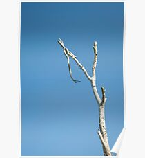 Lone Branch Poster