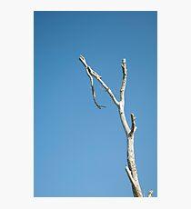 Lone Branch Photographic Print
