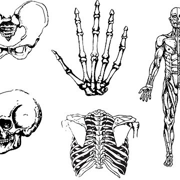 Human Anatomy Illustrations 2 by MVanHyll