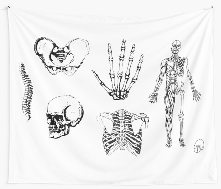 Human Anatomy Illustrations 2 Wall Tapestries By Mvanhyll Redbubble