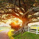 Road to Kiama, New South Wales, Australia by Michael Boniwell
