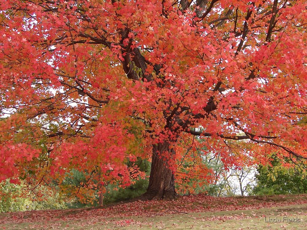 Red Tree by Linda Fields