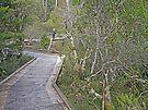 Rainforest Walk at Cradle Mountain by Graeme  Hyde