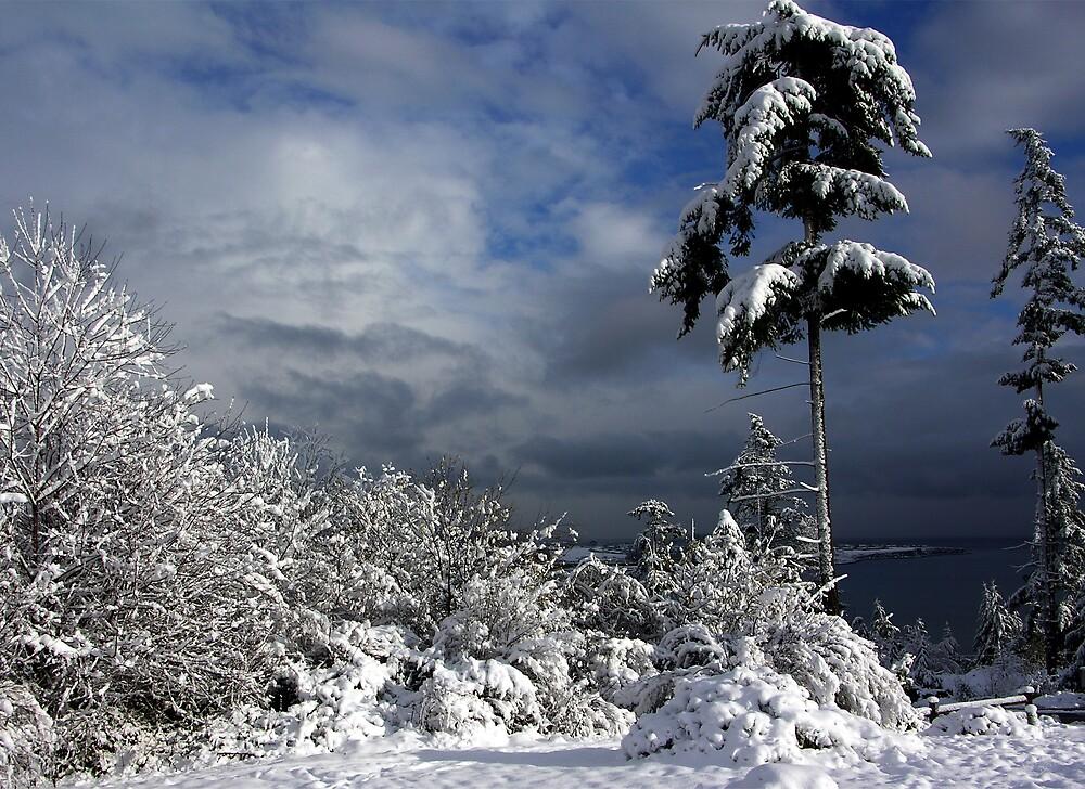 Oak Harbor Snow Tree by Rick Lawler
