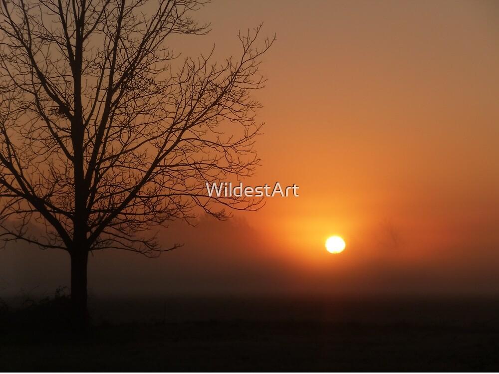 April Morning Sunrise by WildestArt