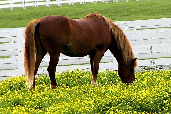 Kentucky Gold ~ Race Horses by SummerJade