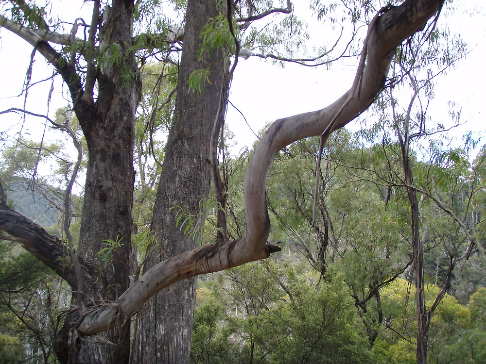 twisted tree branch - looked very different from other branches by gaylene