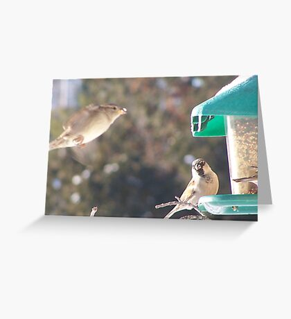 Always up in the air about something! Greeting Card