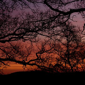 Sunset Branches by dopeytree