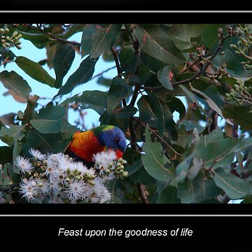 Feast of Life by jade77green