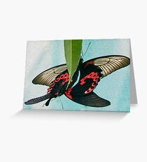 Common Mormon butterflies locking in a mating embrace Greeting Card