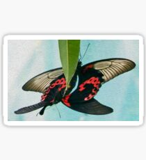 Common Mormon butterflies locking in a mating embrace Sticker