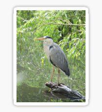 Majestic Heron Sticker