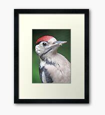 Woodpecker Close Up Framed Print