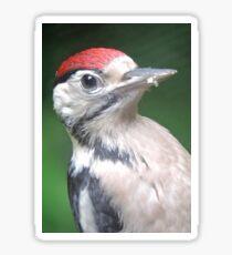 Woodpecker Close Up Sticker
