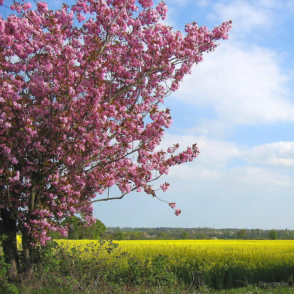 Spring Colours in Hertfordshire by Roantrum