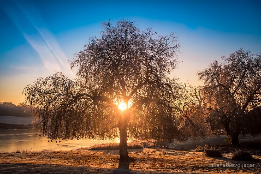 Willow Tree Sunrise by manateevoyager