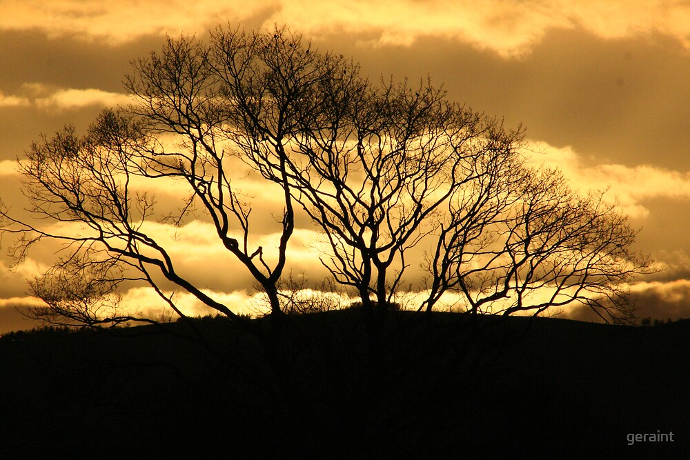 Bronze Branches by geraint