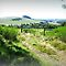 Feature Page/Farmland - Country Victoria (Aust.)