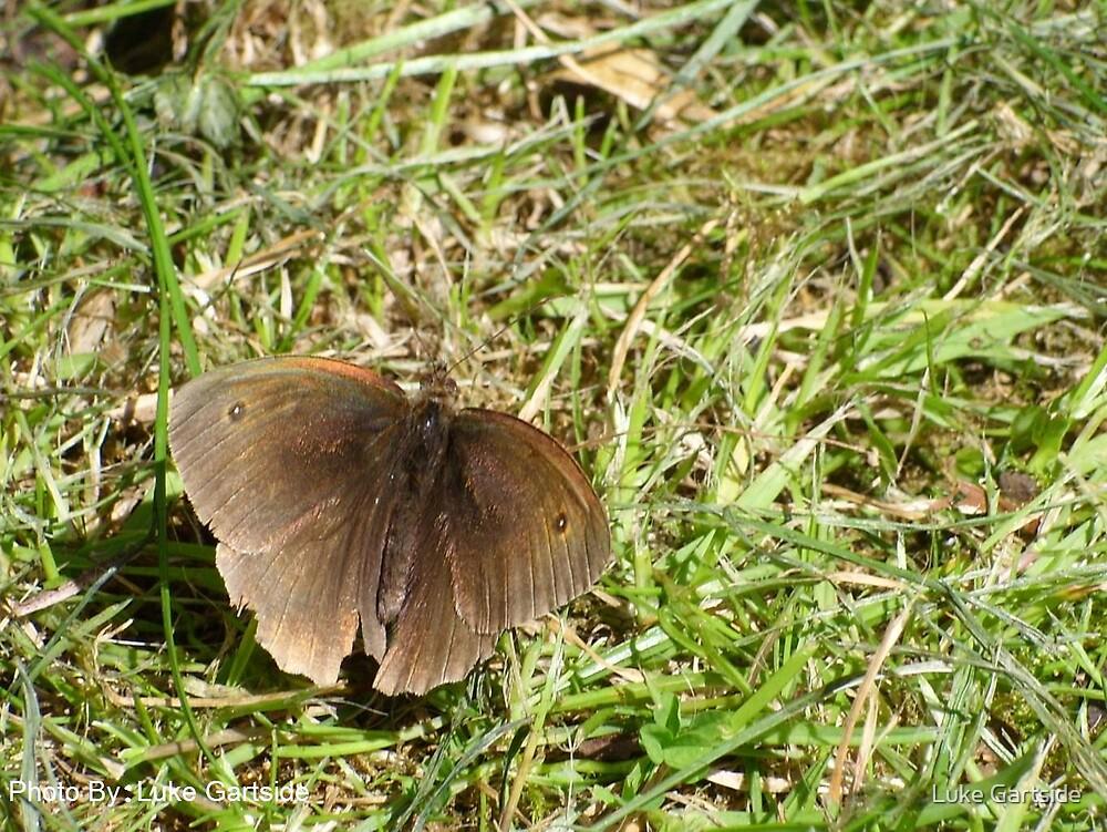 A Butterfly  by Luke Gartside