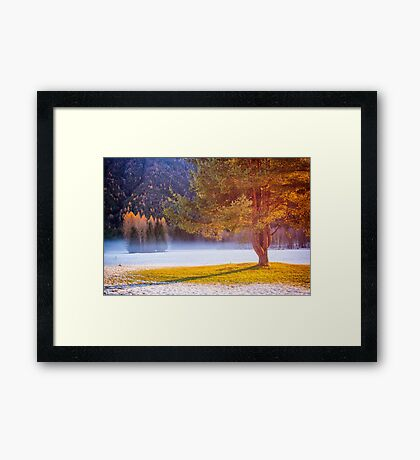 Big tree in the mist Framed Print