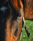 Horse by G. David Chafin