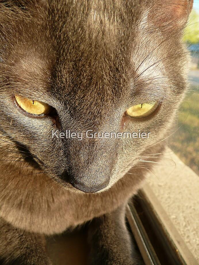 Feline Outlook Second Shot by Kelley Gruenemeier