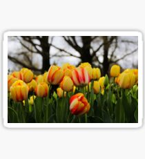 Multi color tulips background Sticker