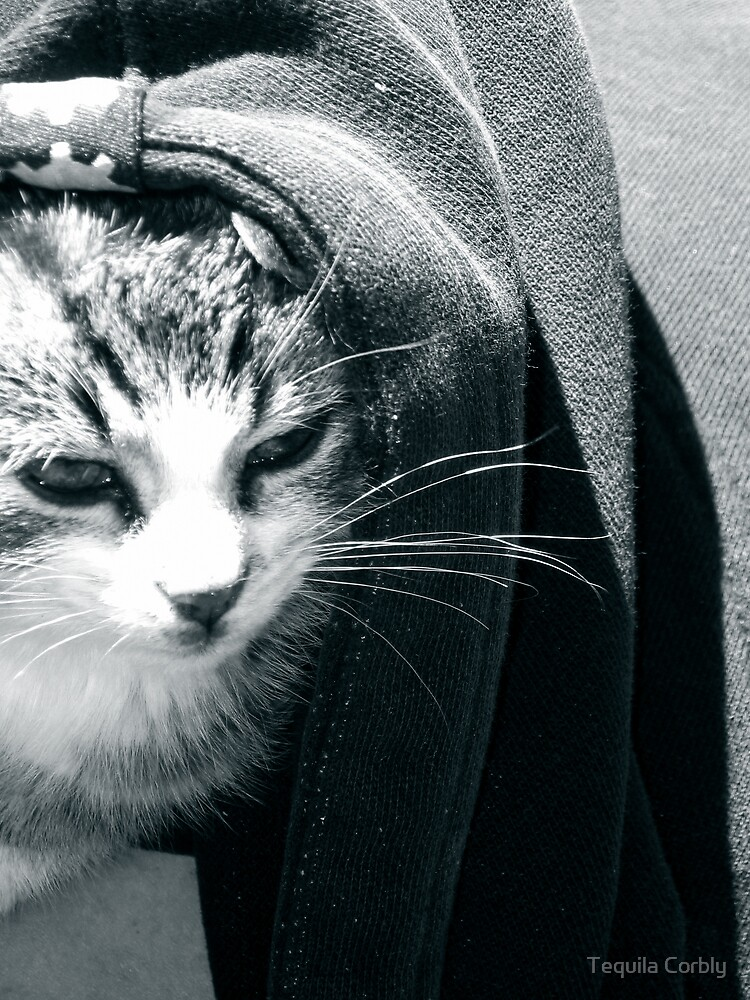 Cat in the Hood by Tequila Corbly