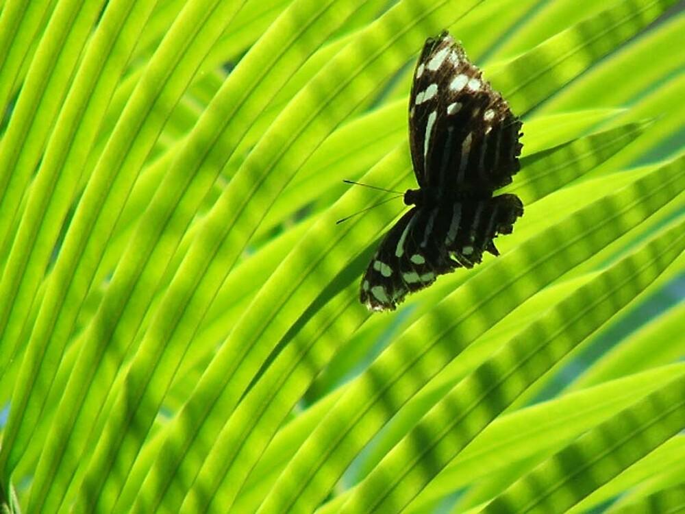 Butterfly by Jayesh Patel