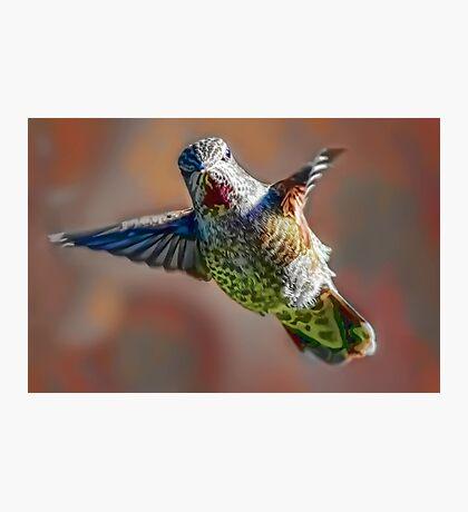 Hummingbird Dreams Photographic Print