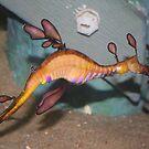 Sea Dragon by Amy Trebilco