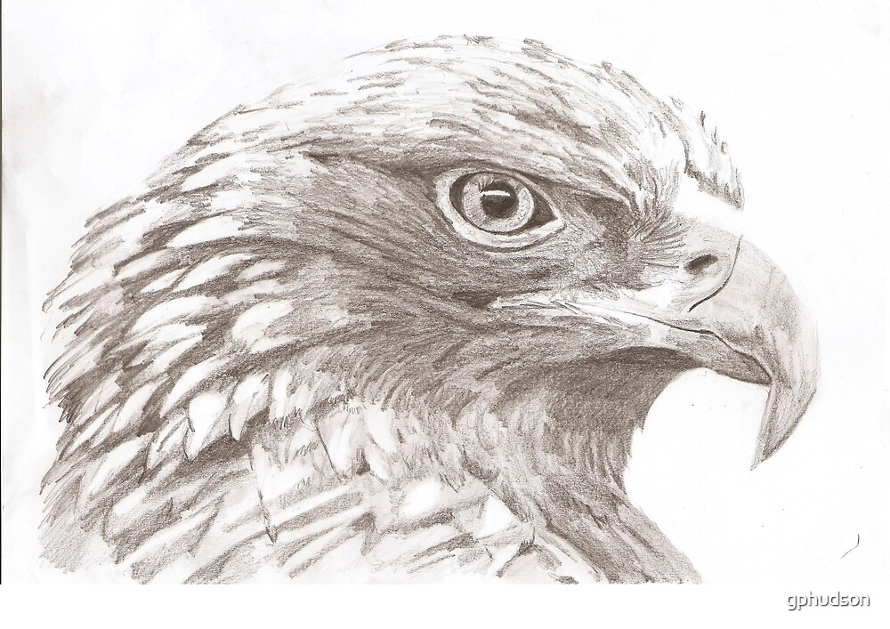 Eagle by gphudson